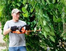 Jeremy McKinnis trims tree branches