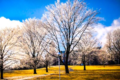 Dazzling trees on the Dana College Campus.