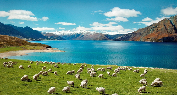 5 Things You Need to Know about Visiting New Zealand (www.99traveltips.com)