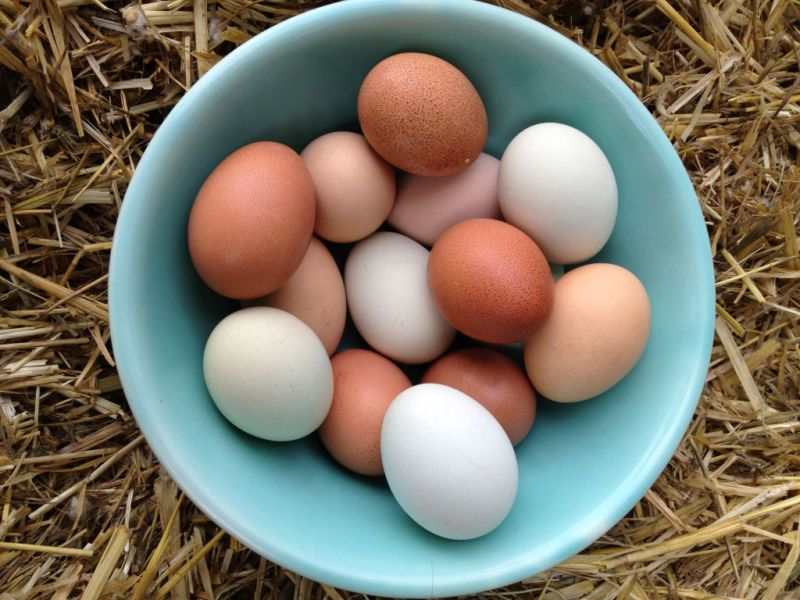 Eat and Lose Weight 10 Foods That Help Losing Weight eggs