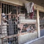 17,000 Killed in Syrian prisons since 2011
