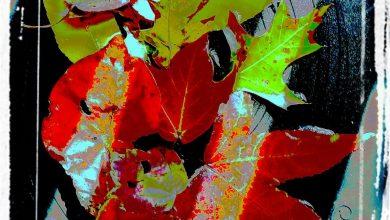 """Autumn Still Life"" (2016) by Remy Aqui"