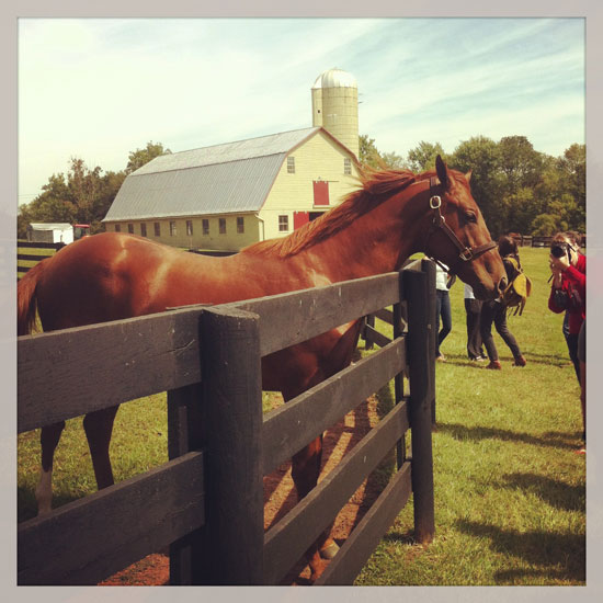 About four horses call East Oaks home.