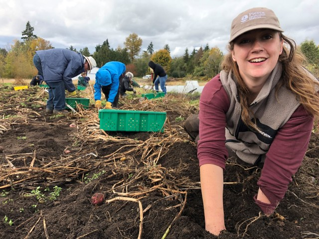 WSC member Katherine serving with Pierce Conservation District, in a garden bed with volunteers.