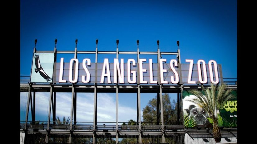 Pandemic Protocols And The  Reopening Of LA Zoo