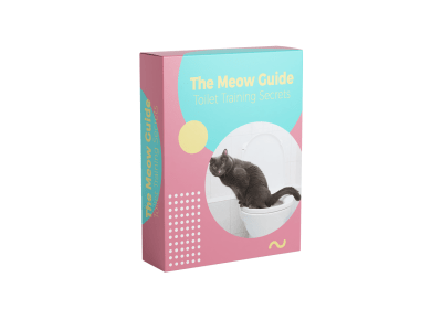 Toilet Training Cat Reviews – Techniques To Teach Cat Toilet Training In The Right Way?