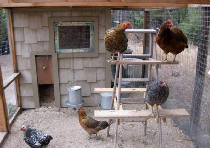 Chicken Roosting Perches