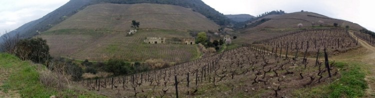 Wine In the Time of Coronavirus, Part 50: Opposites, Attractive (Comparing/Contrasting Portugal's Douro and Vinho Verde)