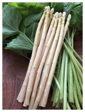 White Asparagus | 白アスパラガス