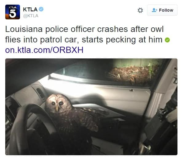 Louisiana police officer crashes after owl flies into patrol car, starts pecking at him