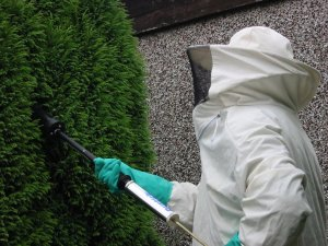 treating a wasp nest