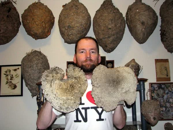 terry prouty header 600x450 - Meet the man who manages his anxiety by collecting wasp nests