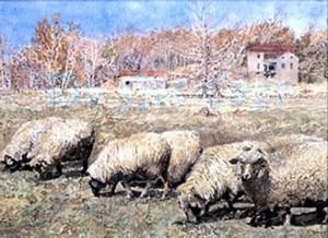 hermann pastoral 3