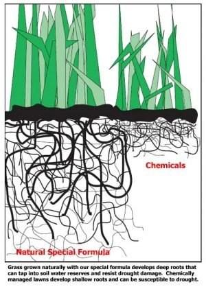 organic vs. chemicals