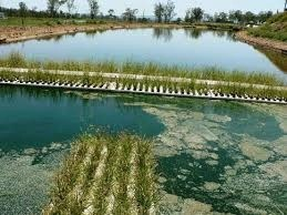 phytoremediation of contaminated land and water