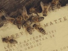 Save bee paper