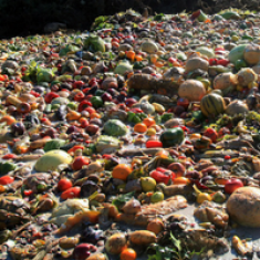 Food waste at a landfill.