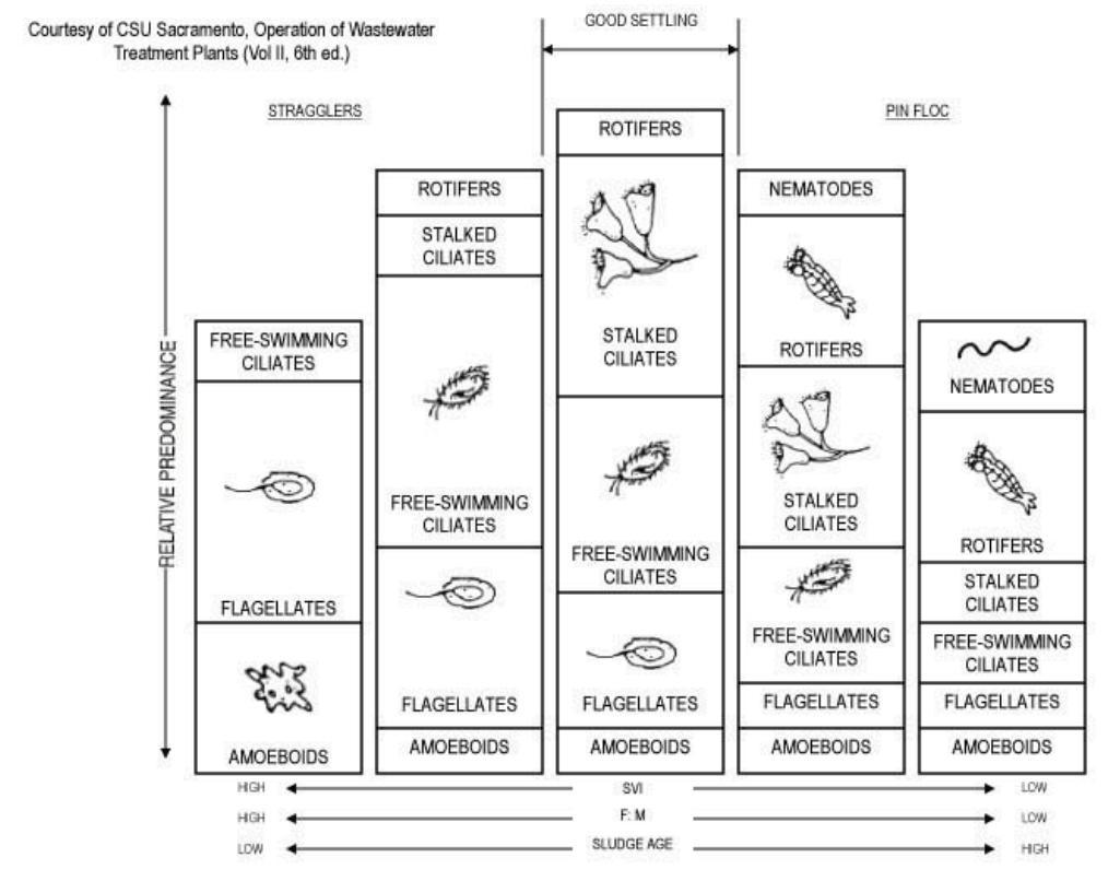 Microorganisms Vs Age