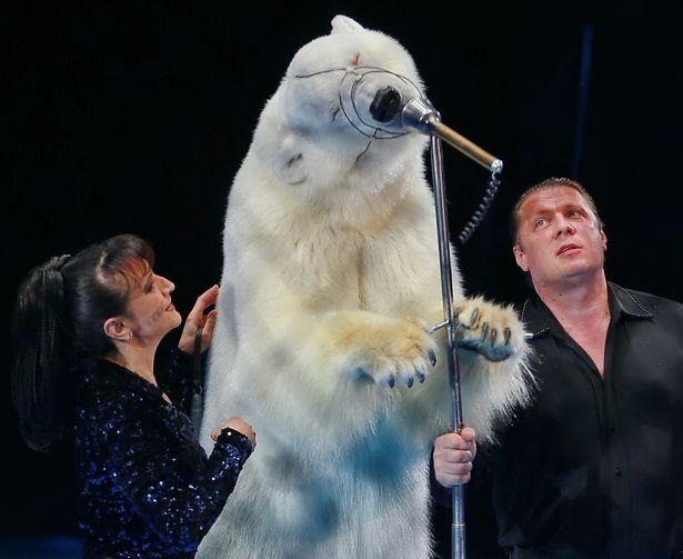 A-polar-bear-performs-during-a-show-at-the-Ivanovo-circus