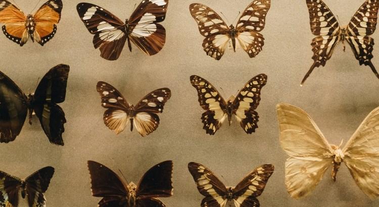 biology-butterflies-collection-1028904