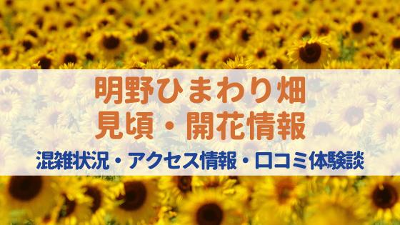 明野ひまわり畑2020の見頃・開花状況・混雑状況は⁈口コミや出店情報もご紹介!