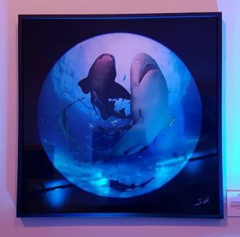 Oris-Tiburones-2
