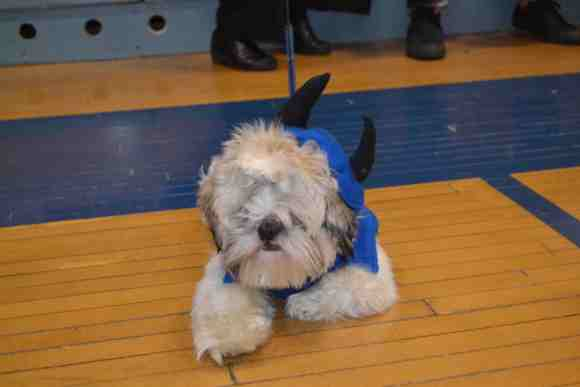 Mocha, the new Blue Devil (Photo: Michelle Cuthbert)