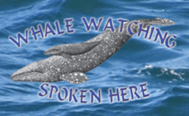 whale-watching-spoken-here