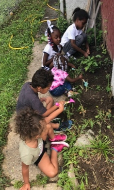 4 young children planting tomato plants in garden bed