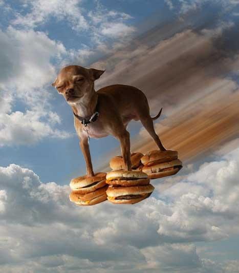 hamburgers, hamburgers, hamburgers!