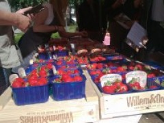 Aardbeiencollege
