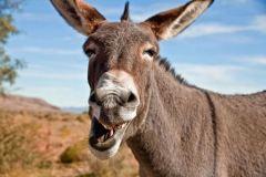 Science sunday: over ezels en botox, marmite en oude mensenwijn