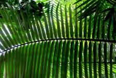 Kew palm leaf pattern P1050626