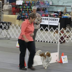 Lucy Birmingham Kennel Club Rally