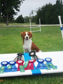 Suucessful day ay the agility trial