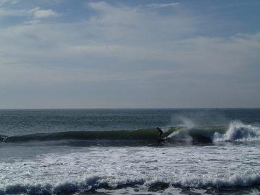 CA beach in route to Kooikerhondje Dog show