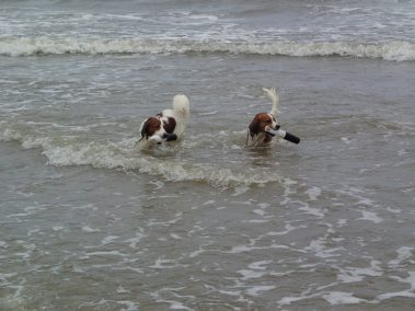 Astro and Finn at the beach