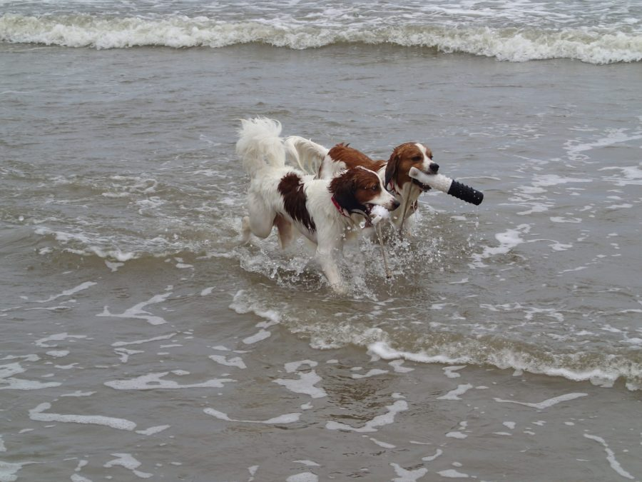 Check out the Photo Gallery of Finn and Astro at the Beach