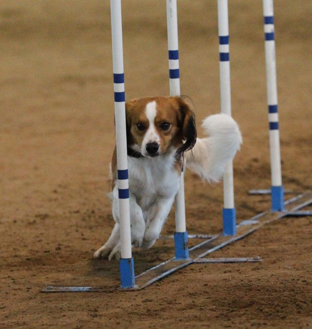 New Agility Photo Gallery has been added