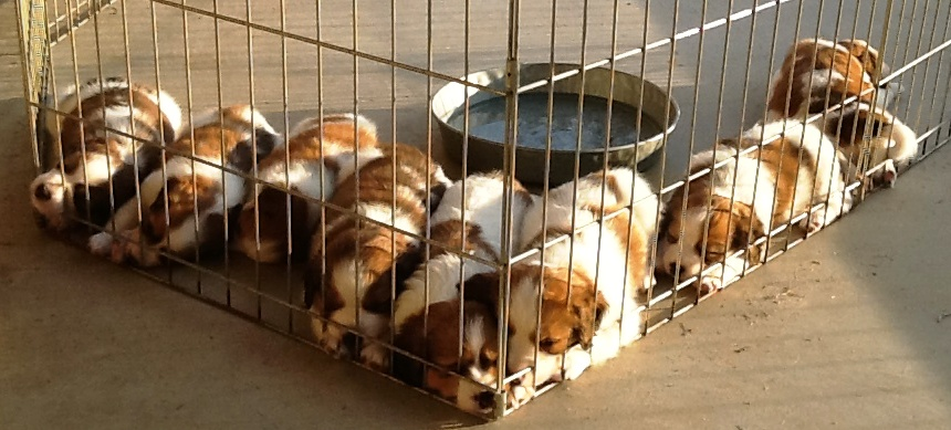 2015 Canine Breeder Excellence Seminar at UCDavis