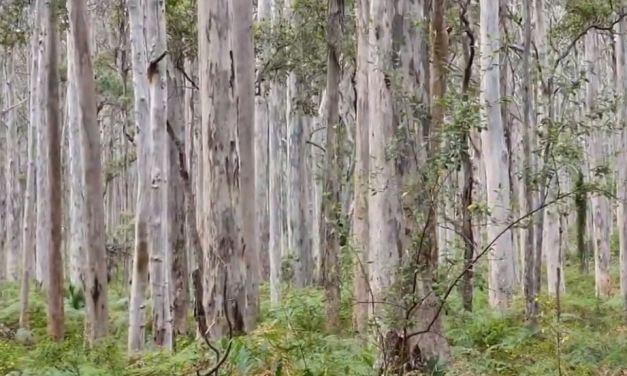 WatercoloursWA Camp – 2020 – Boranup Forest