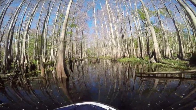 A Swift Ride up Taylor Creek – Jetski