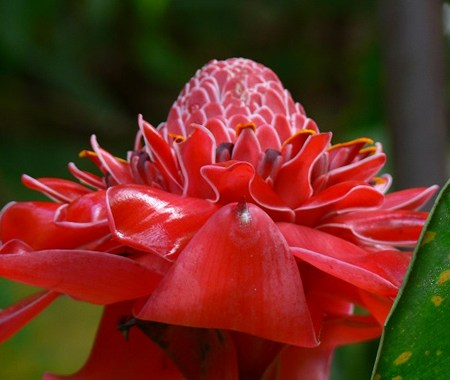 Holiday Package – Butterfly Villa