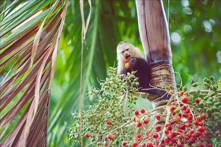 Costa Rica Wildlife Adventure Tours