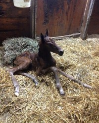 2015 Filly, SpiceOLife Present Tense X Fair Catch