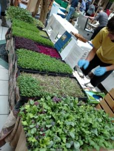 winter microgreens market