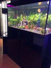 Aquaerene Aquarium