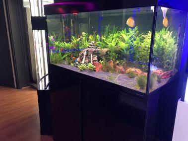Water Life Aquarium