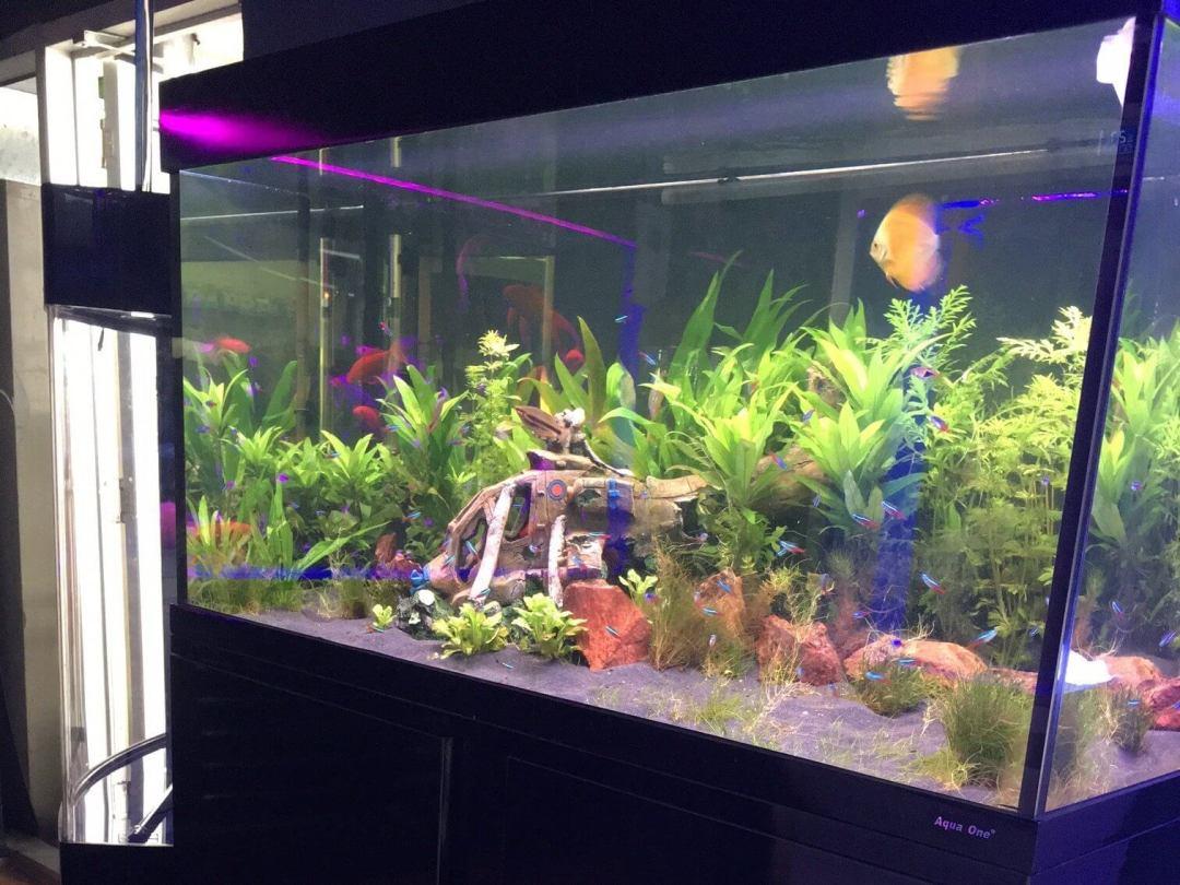 Fish Tanks For Sale - Large Fish Tanks