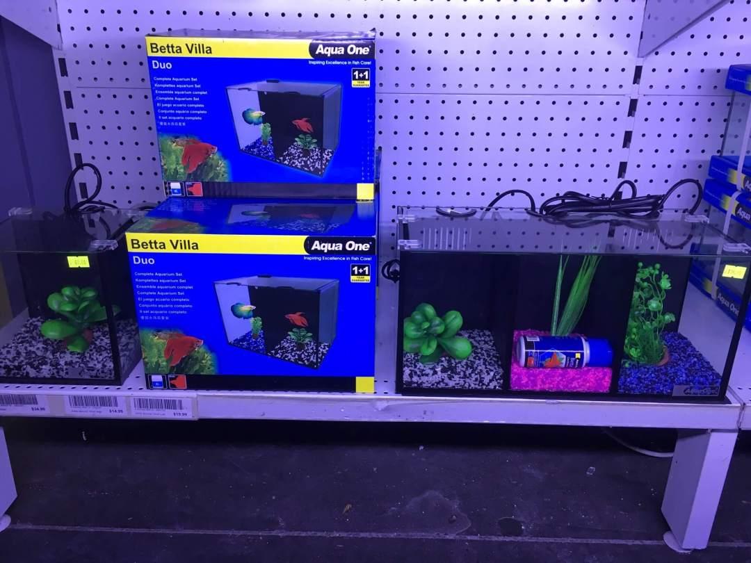 Betta Fish Tank Melbourne   Betta Villa Aqua One